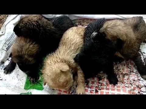Rescatados seis cachorros hallados en un contenedor en Lugo