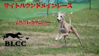 2015年5月31日 サイトハウンドメインレース! イタグレ カテゴリー BLCC...