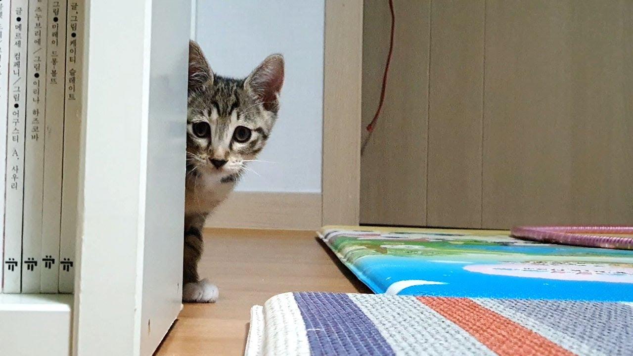 잠자리 잡다가 독사 보고 심장마비 일으킬 뻔. 고양이가 메뚜기를 처음 보던 날   반려동물 키우기 쇠살모사