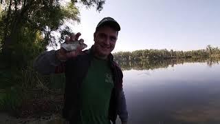 Такой плотвы я не ловил.Рыбалка с берега.Ловля крупной плотвы и карася.Рыбалка с братьями.Фидер.