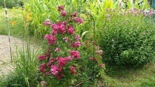 Арка для квітів своїми руками(Саморобна арка для квітів з елементами холодної ковки. http://spensor.if.ua., 2013-08-27T08:41:12.000Z)