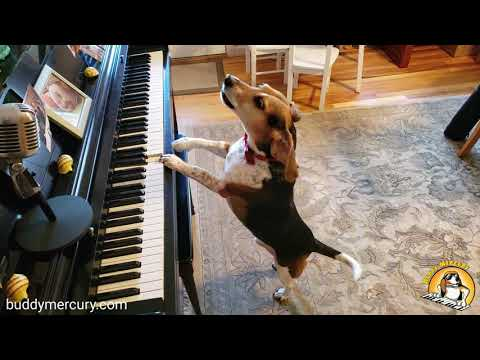 Don't Stop Me Now! (Queen Cover feat. Buddy Mercury dog)