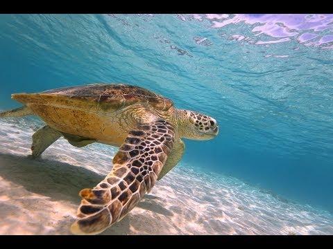 癒しの海。慶良間諸島・渡嘉敷島ダイビング HD動画 Diving in kerama