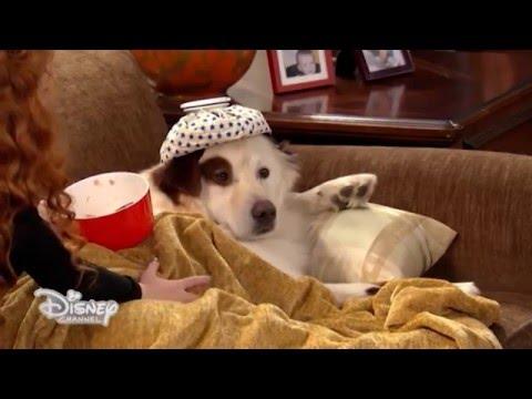 Dog with a Blog - Stan ha davvero la febbre? - Dall