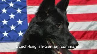 CzechEnglishGerman dog commands (audio+written form)