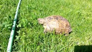 Кот Сонник и черепаха Решка