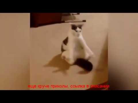 Воскрес, смешные животные до слез видео с озвучкой