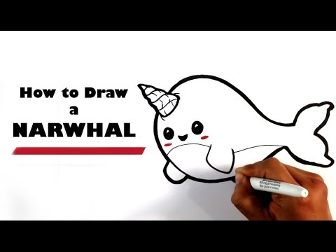How to draw a narwhal chibi easy pictures to draw