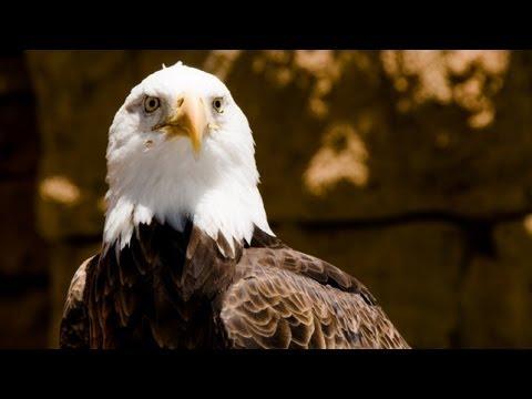 """Disney's """"Flights of Wonder"""" Exotic Bird Show! (in HD)"""