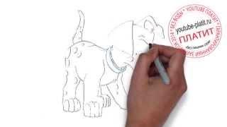 101 далматинец смотреть онлайн  Как правильно поэтапно карандашом нарисовать собаку далматинца