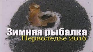 Зимняя рыбалка. Перволедье 2016.(Открытие зимней ловли рыбы со льда., 2016-10-31T06:49:58.000Z)