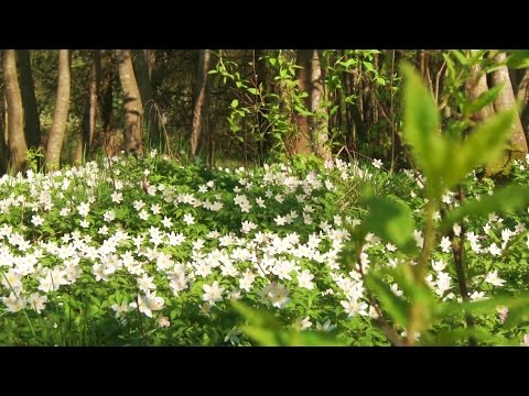 Beautiful Nature Video & Relaxing Music - Flowers (HD)