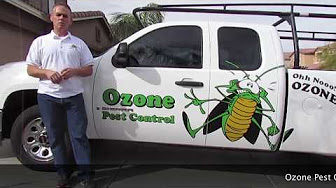 scorpion Pest Control San Tan Valley AZ