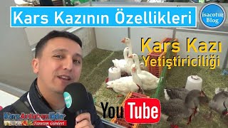 ❤️Kars Kazının Özellikleri ✅Kaz Yetiştiriciliği ⭐️Kars Ardahan Iğdır Tanıtım Günleri 2020 Ankara