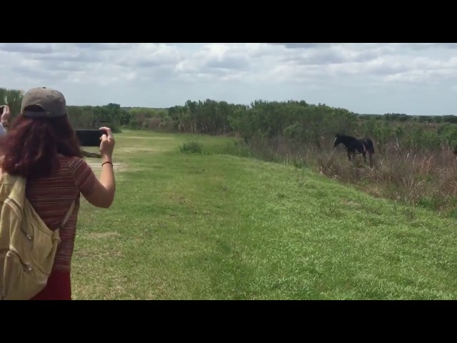 Horse Stomps On Alligator - Only in Florida