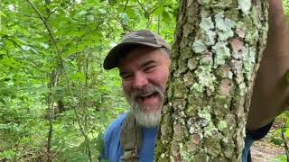 Tree ID on four trees, practical uses, and a dad joke