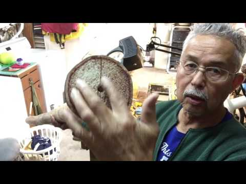 Agave 1 ( How to make an Agave Didgeridoo )