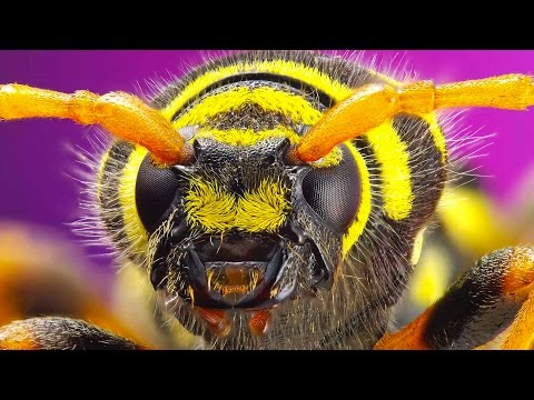 Thumbnail: 10 Extremely Dangerous Insects
