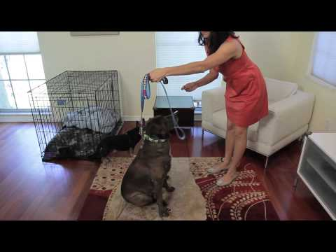 How to Teach Your Dogs Good Manners : Tips for Dog Lovers