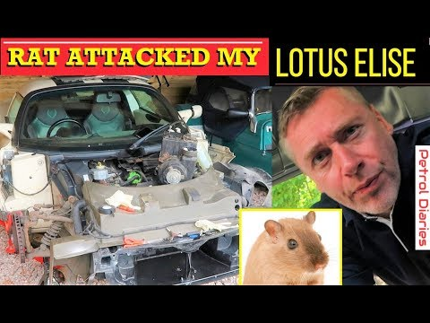 Elise Diary #1 – Lotus Elise Car Damage