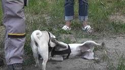Hundeschule Potsdam - Kleine-Hunde-Kurs