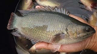 Amazing Fishing Videos Catch A lot Of Fish By Basket Trap-Traditional Best Basket Fishing Trap
