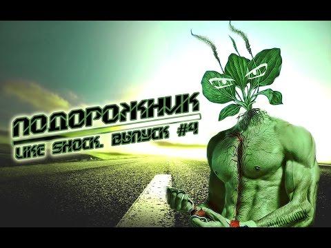 Трава, цветок майоран садовый: полезные свойства