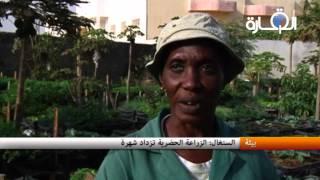 السنغال - الزراعة الحضرية تزداد شهرة