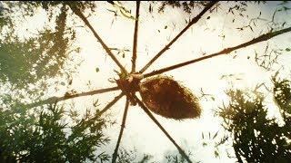 Гигантский паук. \ Конг: Остров черепа