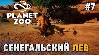 Planet Zoo #7 Сенегальский лев (попытка побега)