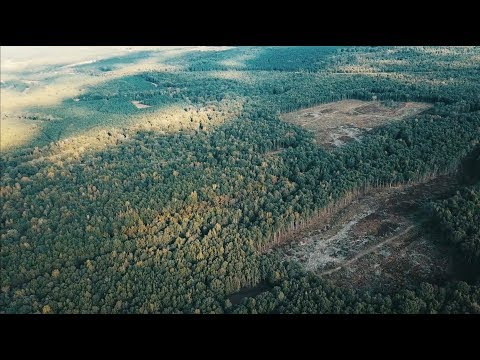 Clearcuts For Deer Hunting - The Management Advantage