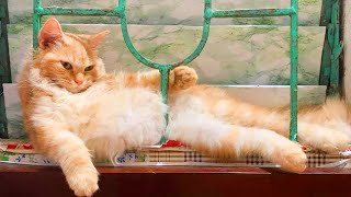 Hilarious CATS  There's absolutely NOTHING MORE FUNNY!