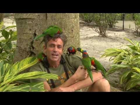 Nanday Parakeets, West Palm Beach Florida