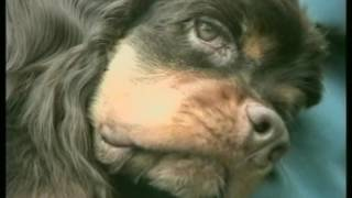 видео 6 советов, как уберечь животное от теплового удара