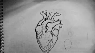 How to draw hearts (realism)