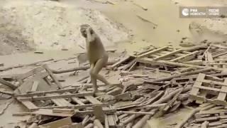Женщина борется за жизнь в грязевом потоке