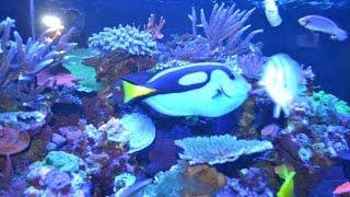 США. Красотища: Где купить Морской аквариум, кораллы, рыбки, МАГАЗИН в Орландо, Цены(Помощь иммигрантам в США - http://ru-florida.com Мы рады помочь всем, кто собирается на отдых или ПМЖ в США в солнечный..., 2015-02-18T19:30:08.000Z)
