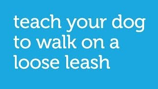 How To Walk Your Dog With A Loose Leash (petco)