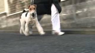 愛犬の歩き方をスローで観察してみました.