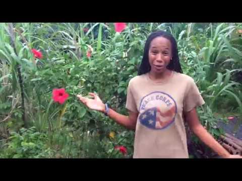 Peace Corps Comoros - Women of Comoros Mentoring Program