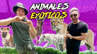 LOS ANIMALES MAS EXOTICOS DE MEXICO 🐯