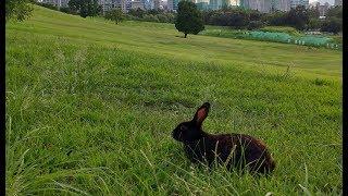 공원의 기적, 토끼 까망이 - 동화 같은 3년 간의 기록