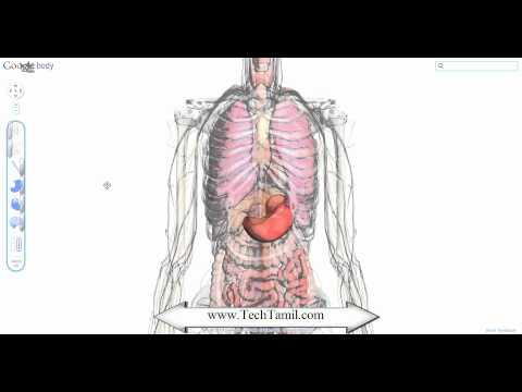 Virtual Body Dissection using google