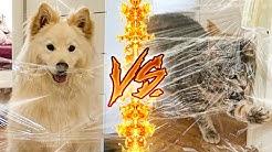 CHIEN VS CHAT ! (Qui est le plus intelligent ?!)