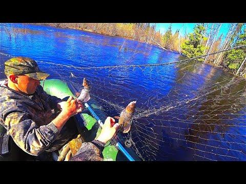 Ловим рыбу на сети. Улов удивил!
