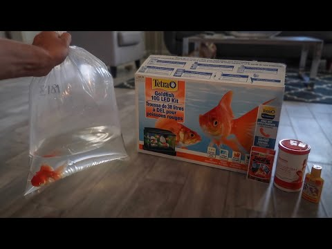 GOLDFISH *ONLY* AQUARIUM SETUP!!