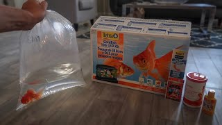 GOLDFISH *ONLY* AQUARIUM SETUP…
