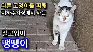 다른 고양이들을 피해 지하주차장에서 사는 길고양이 땡땡이