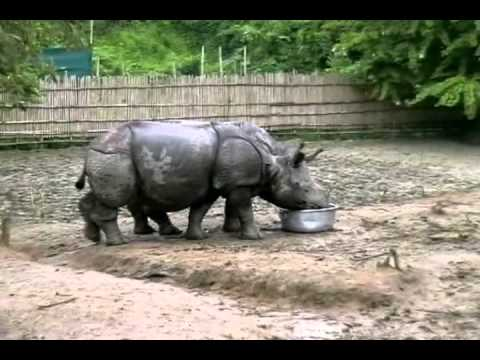 Rhino reintroduction project