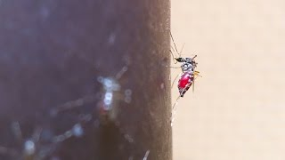 UN Responds To Mosquito-Borne Zika Virus